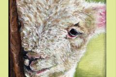 Lynn lamb