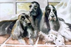 Broward-Humane-Society-Commission-2