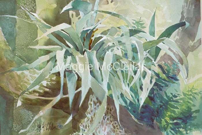 bromeliad500